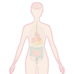 Image of body with skin highlighted