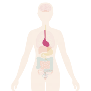 Image of the body with the heart highlighted