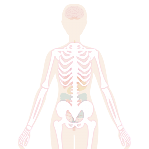 Image of the body highlighting muscle aches
