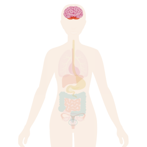 Image of the body with a brain highlighted