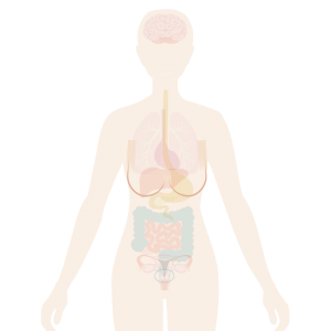 Image of body with breasts highlighted