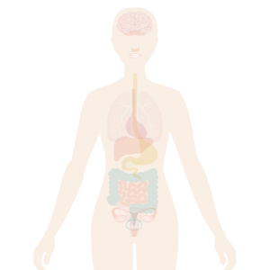 Image of the body with the mouth highlighted