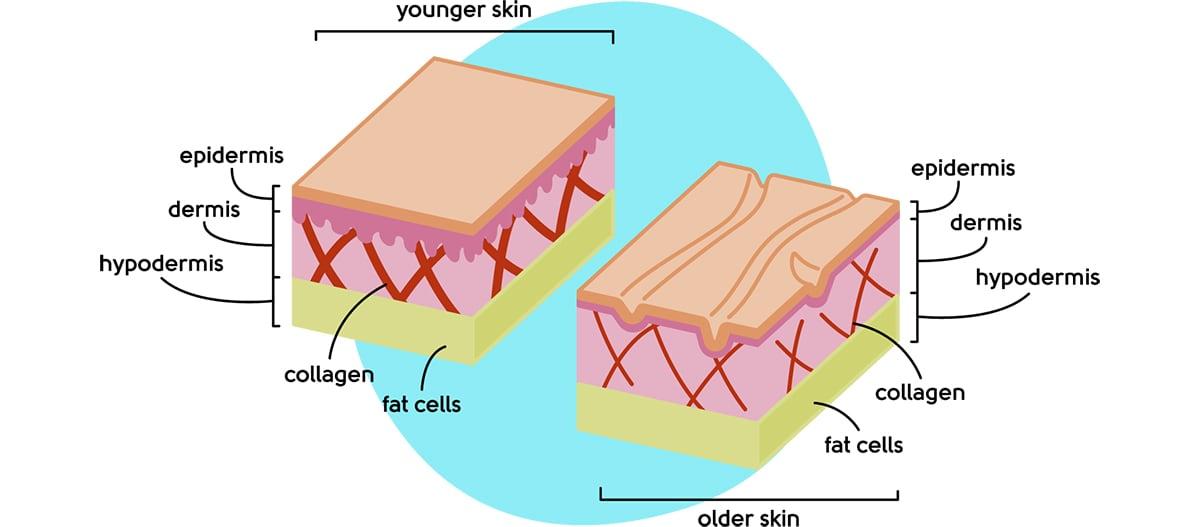 Menopause skin changes