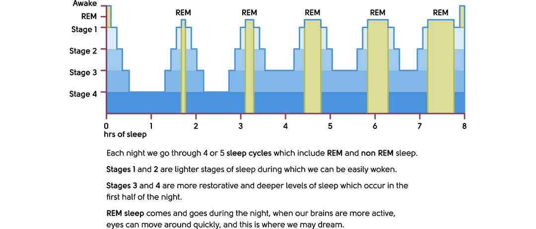 The sleep cycle and stages of sleep